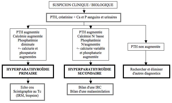 Hyperparathyroïdies et métabolisme phosphocalcique..